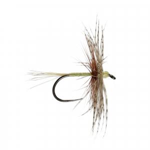 Olive Jingler H/Dry B/L