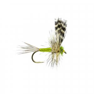 Adams Thorax W/Dry B/L