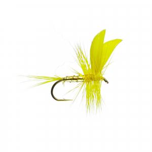 Golden Sally W/Dry B/L