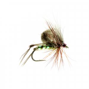 Olive Hopper CDC