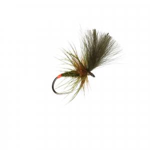 Olive Grunter Dry B/L