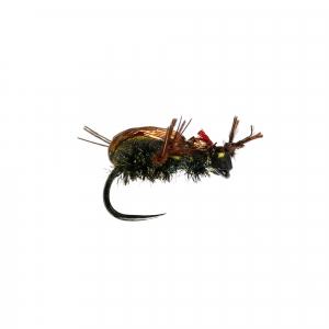Brown Beetle Dry B/L