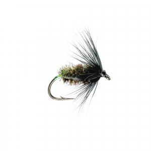 Black & Peacock Spider H/W