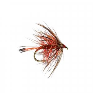 Bumble Fiery Brown B/Wet