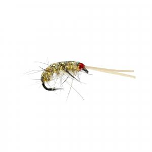 Mullet Shrimp