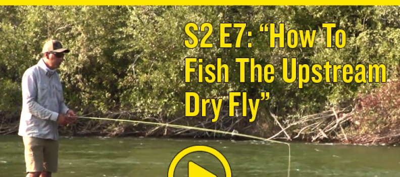 How to Fish the Upstream Dry Fly